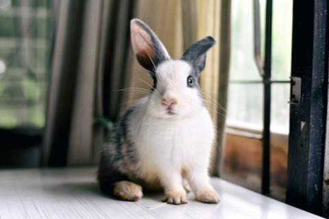 Is it normal for one ear to hear better? Bunny with big ears