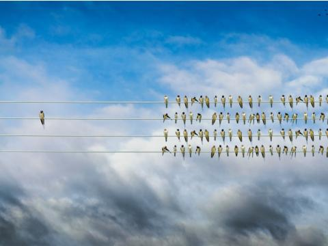 One bird on a wire separate from the rest of the flock social isolation hearing loss